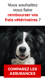 Comparateur assurances animaux
