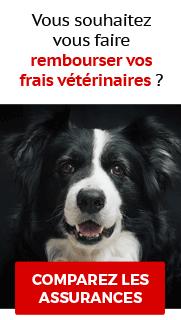 Comparateur assurances animaux