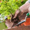podcast-CKIA-FM-Le-jardinier-paresseux-Larry-Hodgson.png